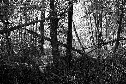 Forest Tableau by Colleen Williams