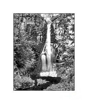 Forest Waterfall in BW by Ansel Price