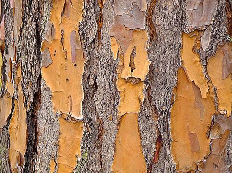 Lynda Lehmann - Forest Within Forest