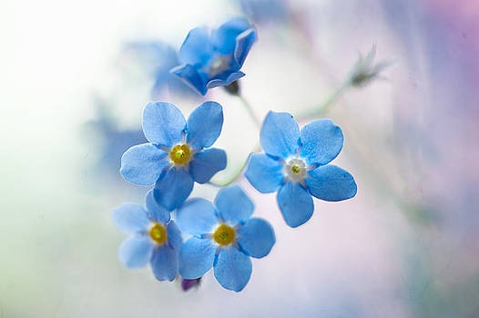 Jenny Rainbow - Forget-Me-Not