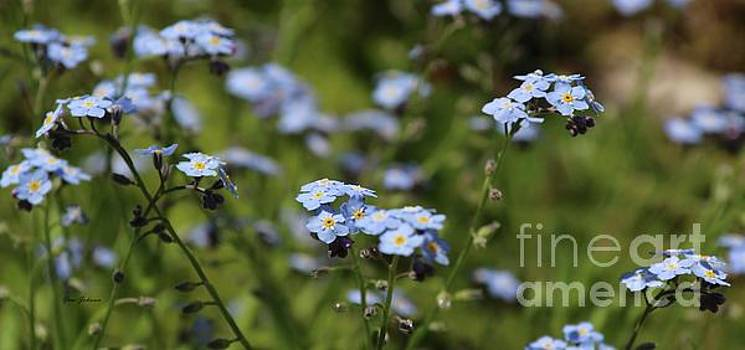 Forget me not by Yumi Johnson