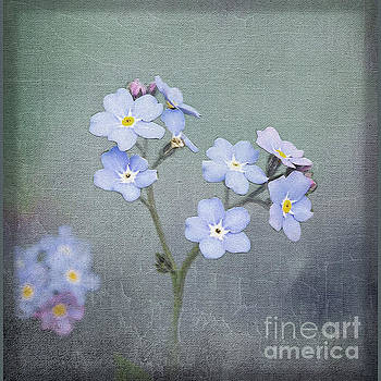 Forget Me Not by Liz Alderdice
