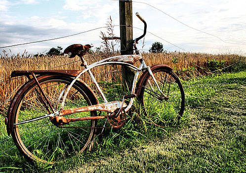 Forgotten Bicycle by Doug Hockman Photography