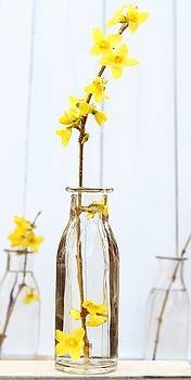 Forsythia  by Emma Manners