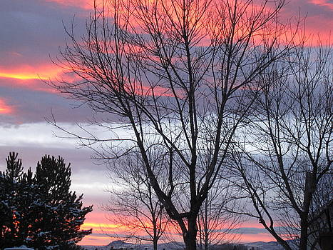 Fort Collins, CO Winter Sunset by Tammy Sutherland