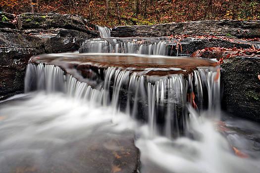 Forward Falls by Lj Lambert
