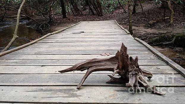 Found Nature by Anita Adams