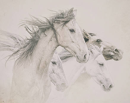 Four Horses by Ron  McGinnis