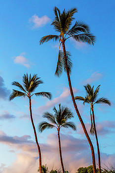 Four Palms by Kelley King