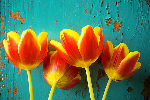 Four Tulips Against Blue Wall by Garry Gay