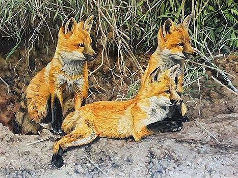 Fox Cubs by Julian Wheat