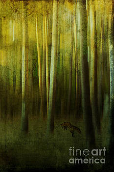 Fox In The Woods by K Hines