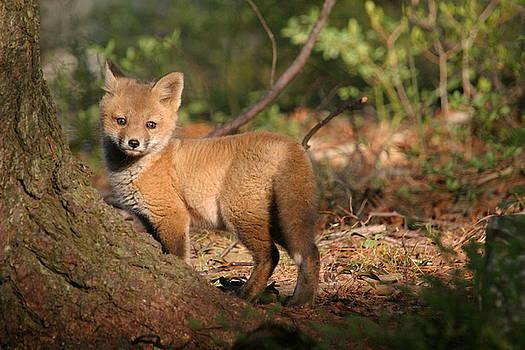 Fox kit by Paul McCarthy