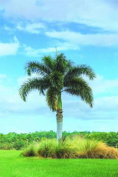 Fox Tail Palm by Sharon Batdorf
