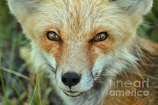 Adam Jewell - Foxy