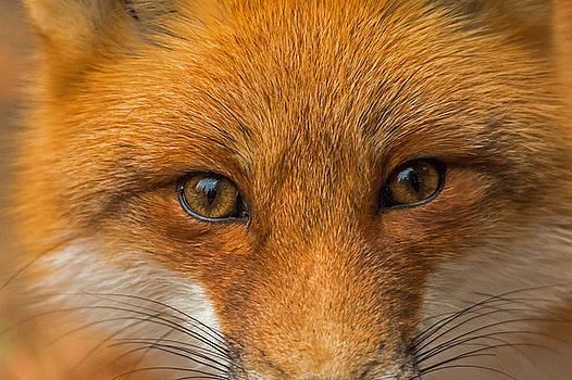 name fox eyes - photo #42