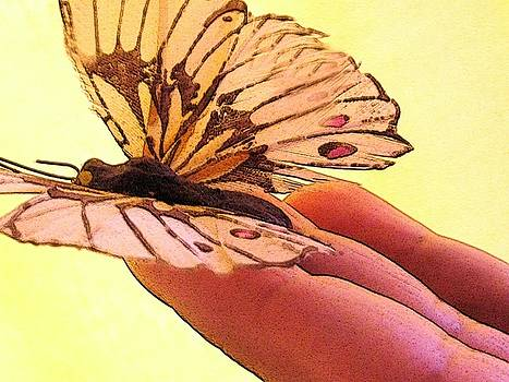 Fragile wing by Nereida Slesarchik Cedeno Wilcoxon