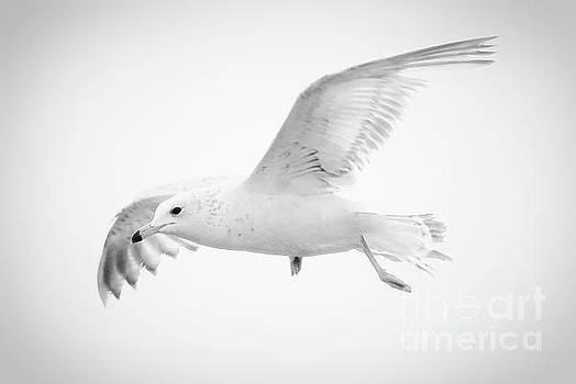 Freedom by Anita Oakley