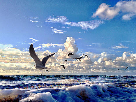 Fresh Blue Yonder by Andrew Royston