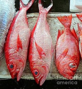 Fresh Red Snappers by Yali Shi