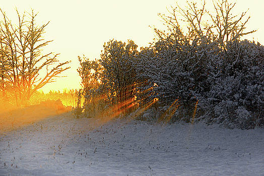 Fresh Snow and Sunbeams by Paul Wash