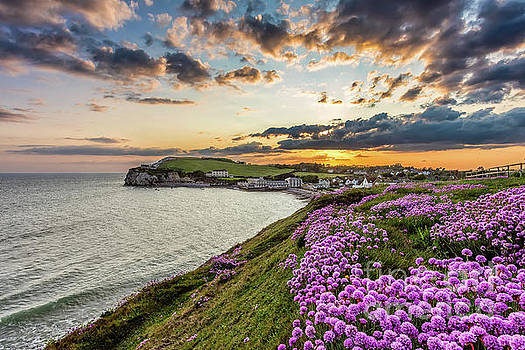 Freshwater Bay Sea Thrift Sunset by English Landscapes