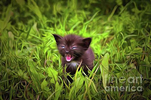 Fretting kitten in the grass by Michal Boubin