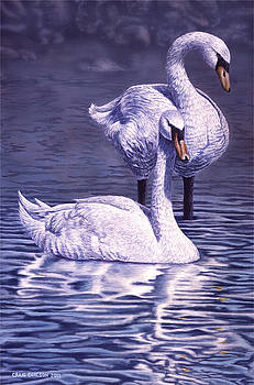Friend or Foe - Mute Swans by Craig Carlson