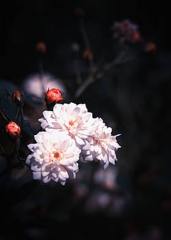 Frilly Petals by Rachel Mirror