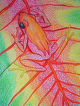 Nick Gustafson - Frog on leaf