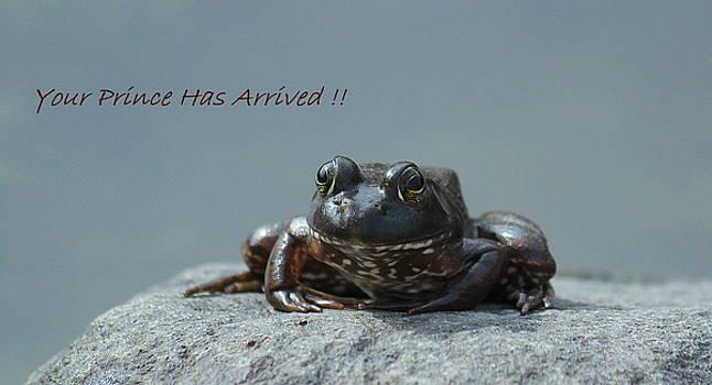 Rosanne Jordan - Frog Prince