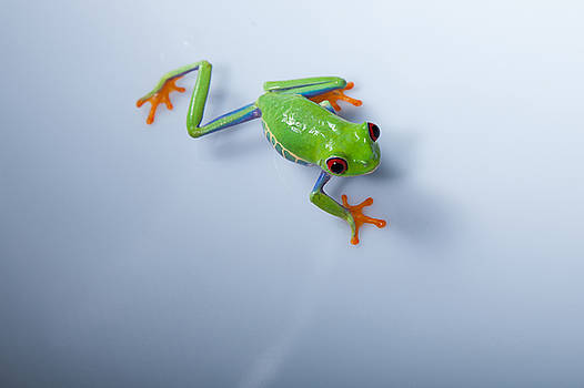 Froggy by Monte Arnold