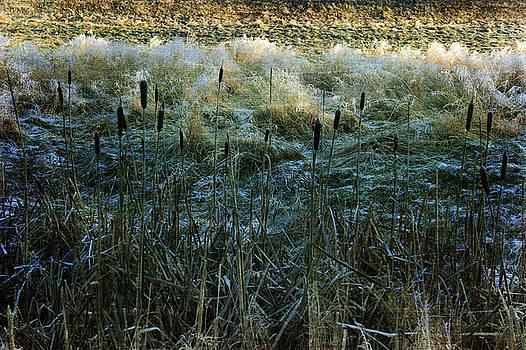 Frost on the Ground by Randi Grace Nilsberg