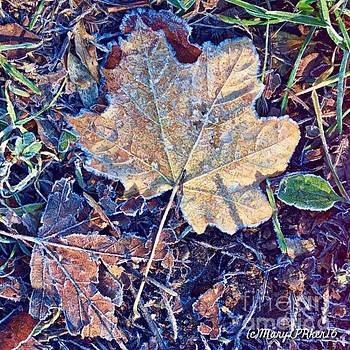 Frost on the  leaf by MaryLee Parker