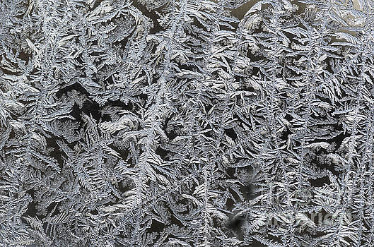 Frost On Window by Tamara Becker