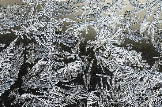 Frost Patterns On A Window by Tamara Becker