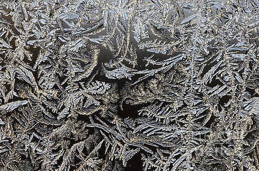 Frost Patterns by Tamara Becker