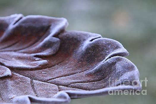 Frosted Bird Bath by Kathy DesJardins