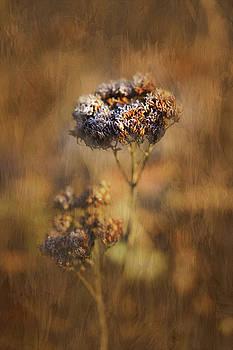 Frosted Bloom by Robert FERD Frank