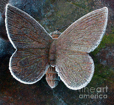 Frosted Butterfly by Kathy DesJardins