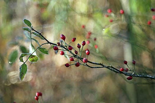 Frosted Red Berries and Green Leaves  by Brooke T Ryan