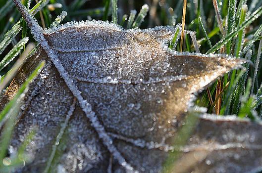 Frosty Autumn by Nikki McInnes