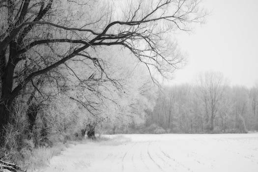 Cathy  Beharriell - Frosty Fields