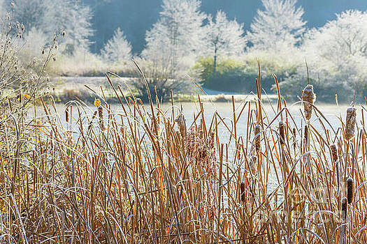 Frosty Morning at the Lake by Thomas R Fletcher