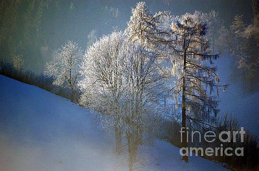 Susanne Van Hulst - Frosty Trees - Winter in Switzerland