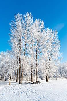 Frosty Wonderland by Nebojsa Novakovic