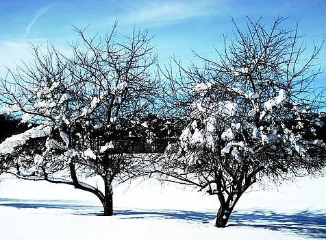 Frozen Apples by Toni Jackson