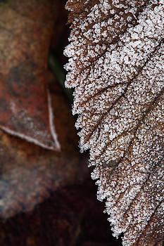 Frozen leaf by Jouko Mikkola