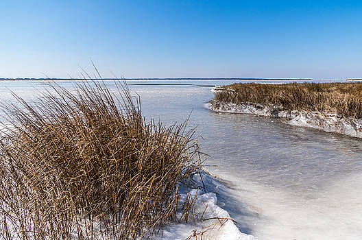 Frozen Marsh by Gregg Southard