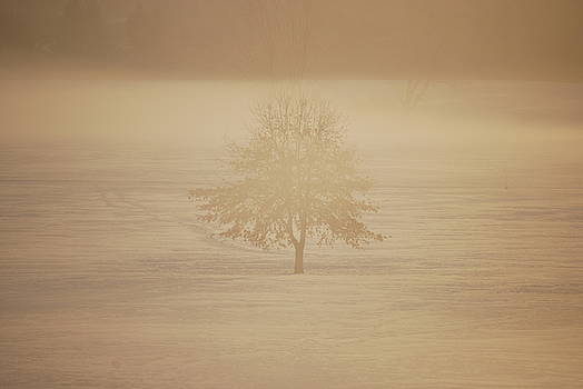 Frozen natural sepia horizontal by Peter  McIntosh